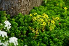 街路樹の根元のミニチュアのような草