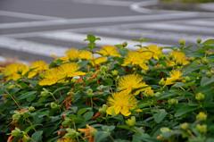 花と横断歩道 Ⅰ