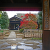 鷹見泉石邸の秋