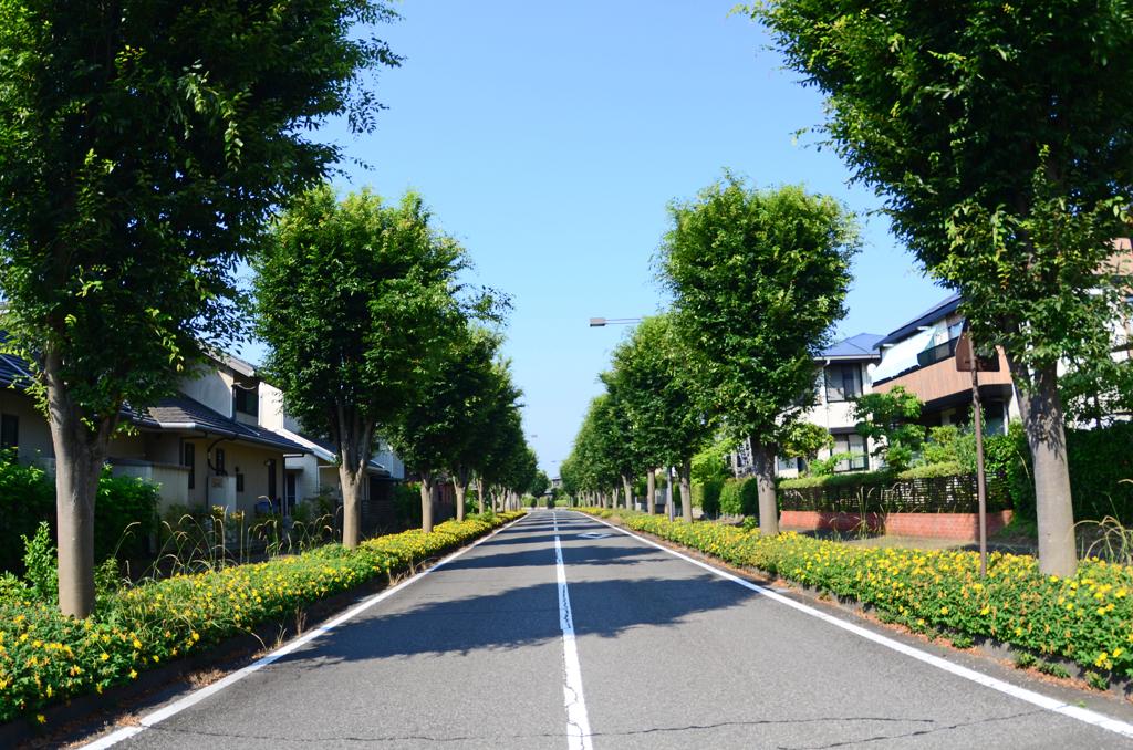 道端に咲く ① ビョウヤナギと並木道