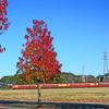 楓と特急 紅葉度 競争