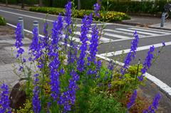花と横断歩道 Ⅱ
