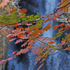 紅葉の小中大滝 ②
