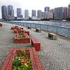 東京散歩 (28)佃島の高層ビル街を望む