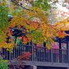 本土寺の紅葉 ② 回廊と紅葉