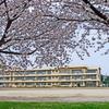 桜は小学校によく似合う ②
