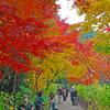 本土寺の紅葉 ⑤ 境内 もみじと人の賑わい