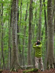 美人林を切り取る人