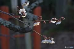 朝の光浴びる花たち