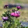 冬の花かな