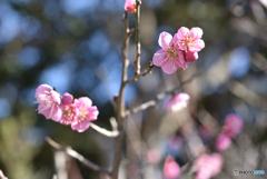 春が来るよ~
