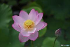 花に、つぼみ