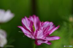 花の中から、おはよう