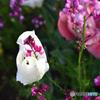 花の中に花