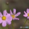 ハチと期の早い花