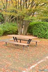 テーブルと落葉