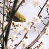 何気に京都市内の写真は久しぶり6