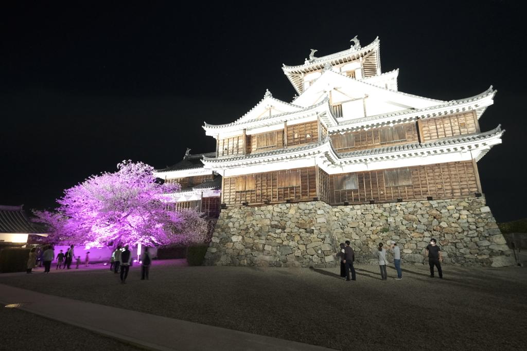 いがいと!夜桜2