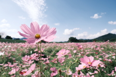 10月の真夏日和、最高気温約30度13