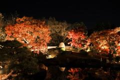 仕事は休業中、紅葉は播州、好古園のライトアップ 3