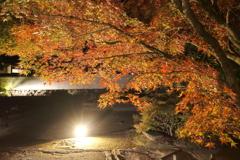 仕事は休業中、紅葉は播州、好古園のライトアップ 1