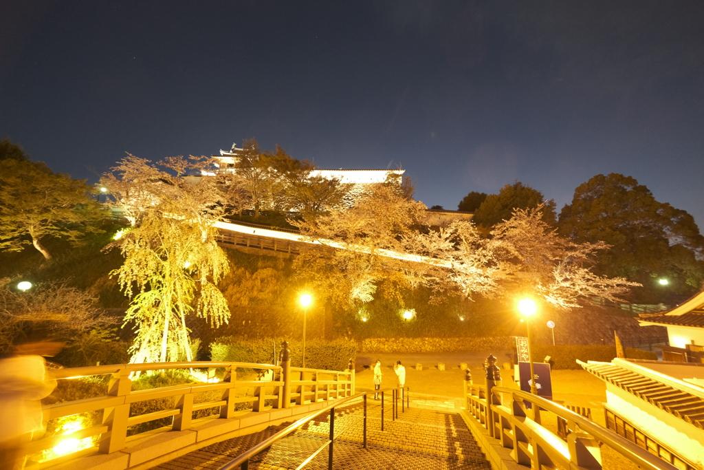 いがいと!夜桜1