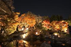 仕事は休業中、紅葉は播州、好古園のライトアップ 4
