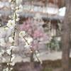 何気に京都市内の写真は久しぶり9