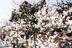 何気に京都市内の写真は久しぶり1