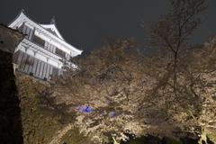 福知山城の夜桜2