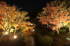 仕事は休業中、紅葉は播州、好古園のライトアップ 2