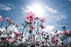 10月の真夏日和、最高気温約30度8