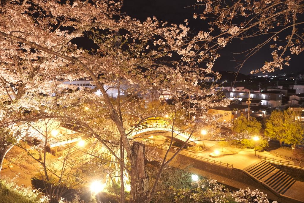 いがいと!夜桜5