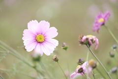晩秋に見れた遅咲きの花3