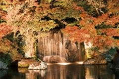 仕事は休業中、紅葉は播州、好古園のライトアップ 6