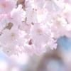 桜の季節が終わった時、GWで滋賀へと異動となります7