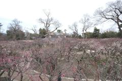 何気に京都市内の写真は久しぶり8