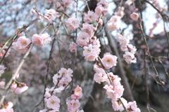 何気に京都市内の写真は久しぶり4