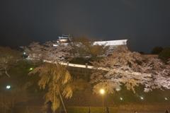 福知山城の夜桜3