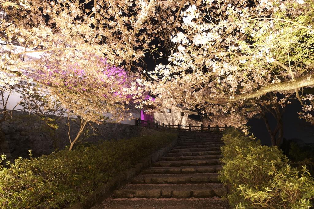 いがいと!夜桜4