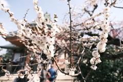 何気に京都市内の写真は久しぶり2