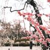 何気に京都市内の写真は久しぶり10