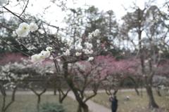 何気に京都市内の写真は久しぶり5
