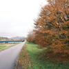 今年の紅葉も終わりに近い時