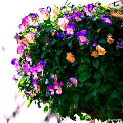 「春よ、来い」(1)