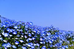 ブルー・ブルー
