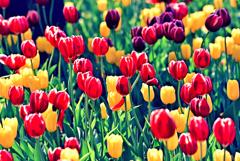もうすぐ春!(2)