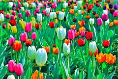 春よ来い!(2)