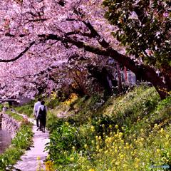 春です。ゆっくりお散歩でも・・・