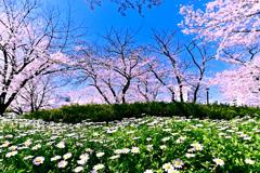 春・春・晴れ